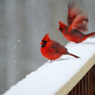 splotches-of-red-in-the-snow_t20_9J3Pk2